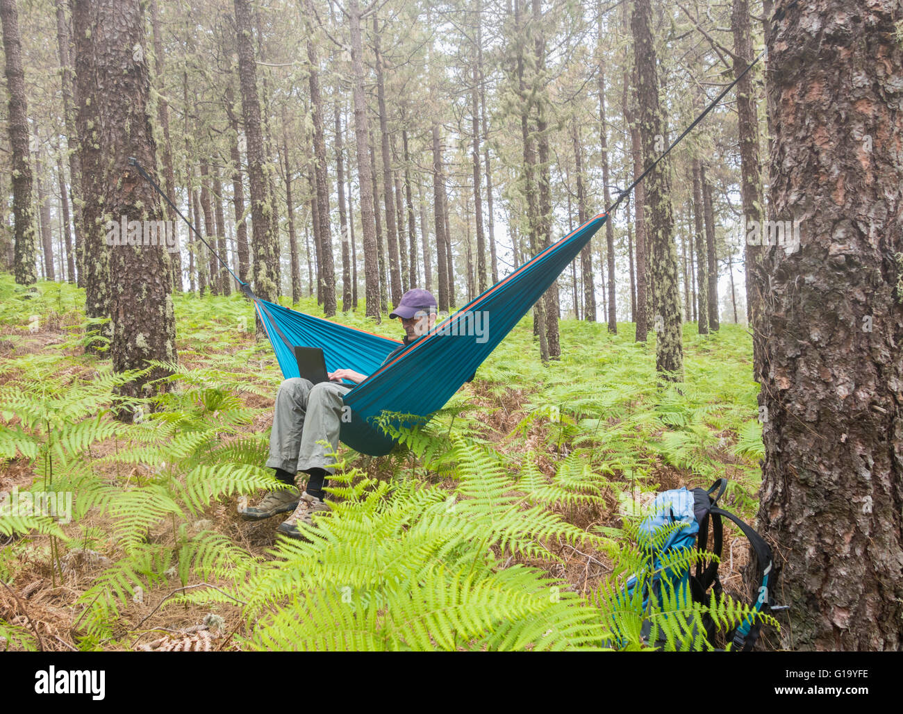 Mature male hiker using laptop in hammock in forest. Possible uses: Travel/retirement/adventure/ digital nomad/... - Stock Image