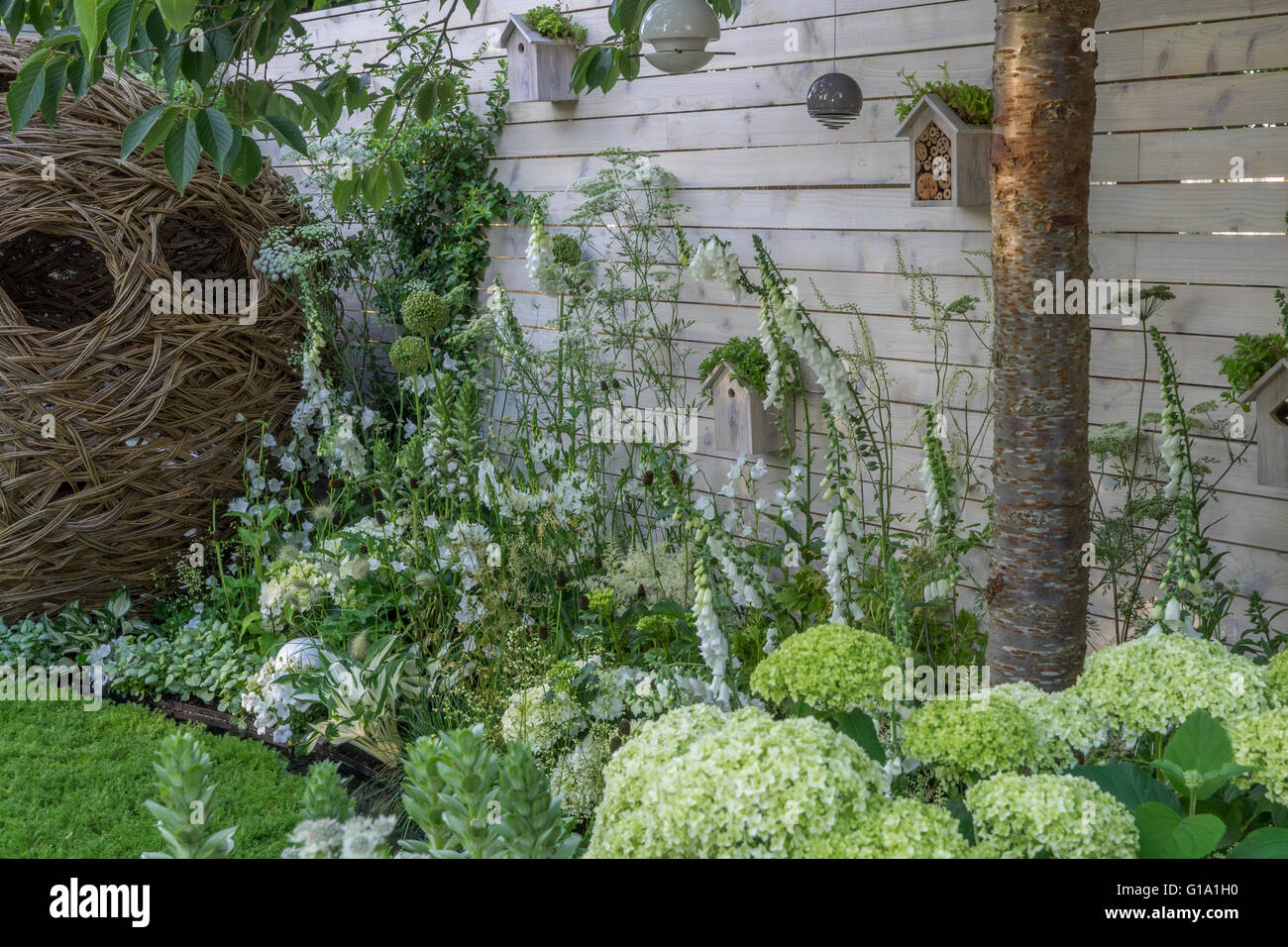 A garden based on White with a white fence and planting.  RHS Hampton Court Show Gardens 2015 - Living Landscapes: - Stock Image