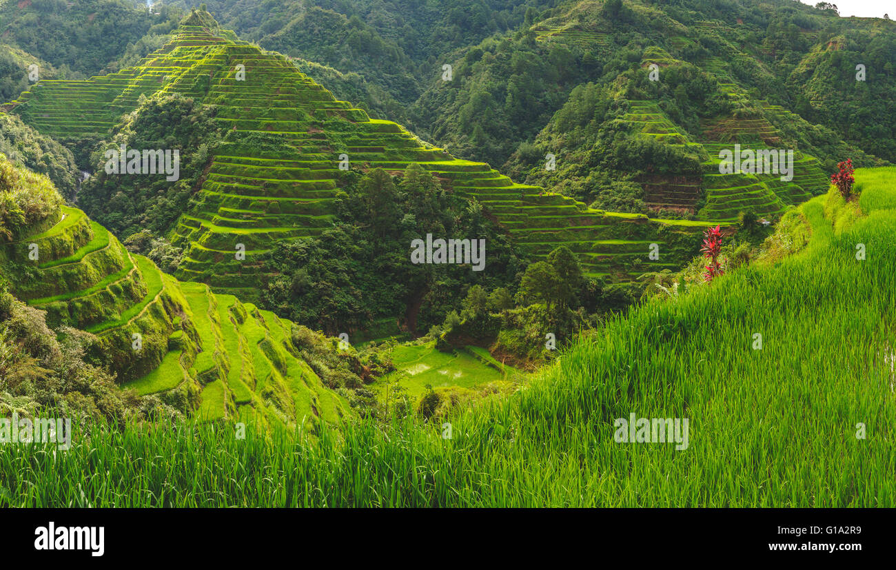 2000 year old rice terraces carved into the mountains in Banaue, North Luzon - Stock Image