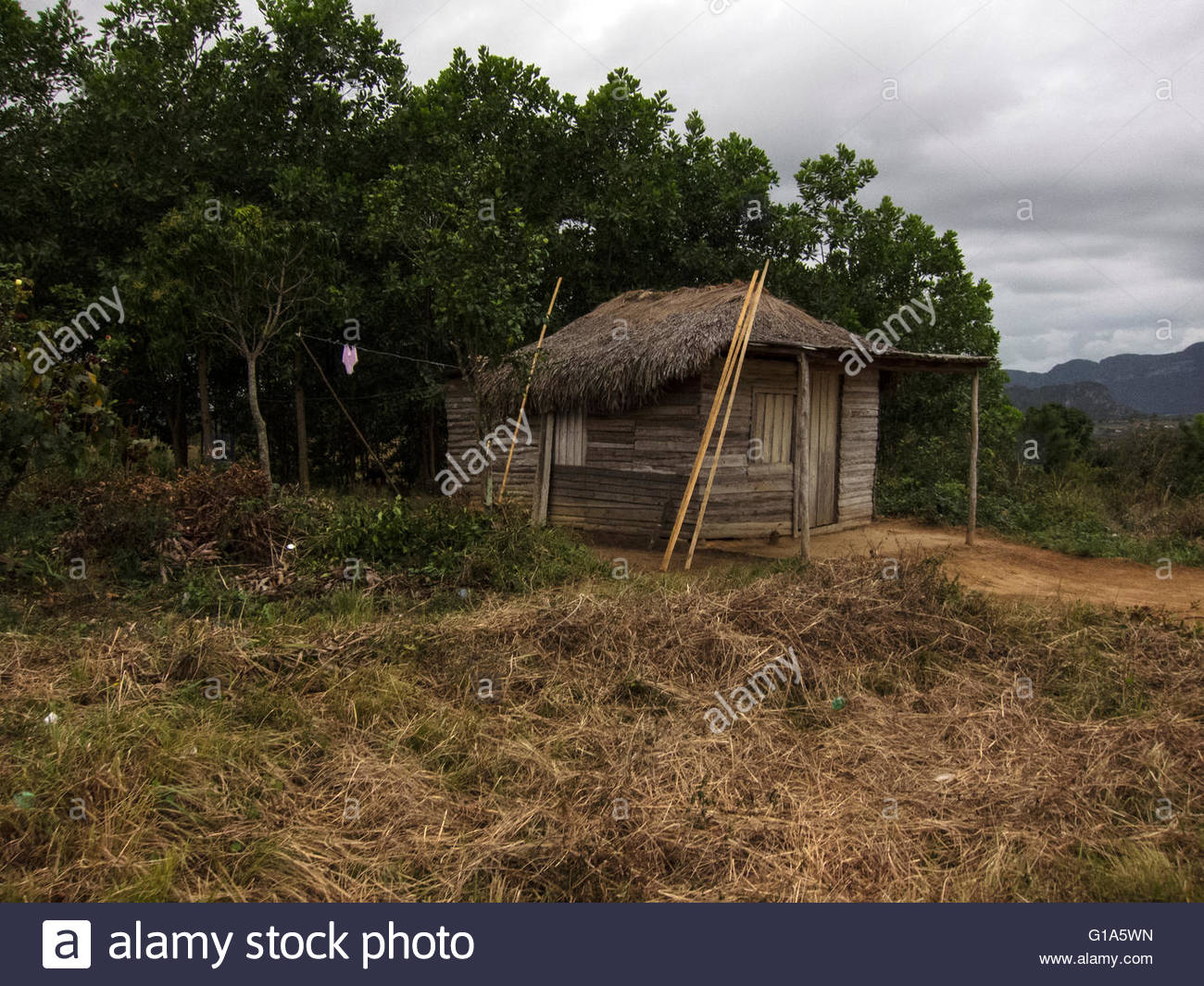 Shack, traditional thatched-roof Cuban 'bohio' (hut) in Vinales Valley, Cuba, a UNESCO World Heritage site, - Stock Image