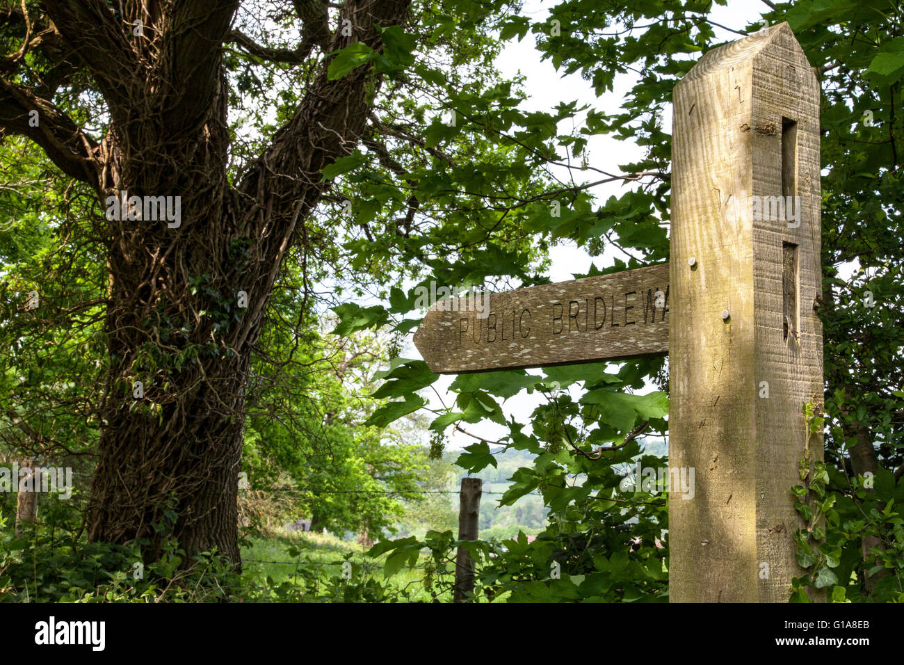 A public bridleway sign in the English Countryside - Stock Image