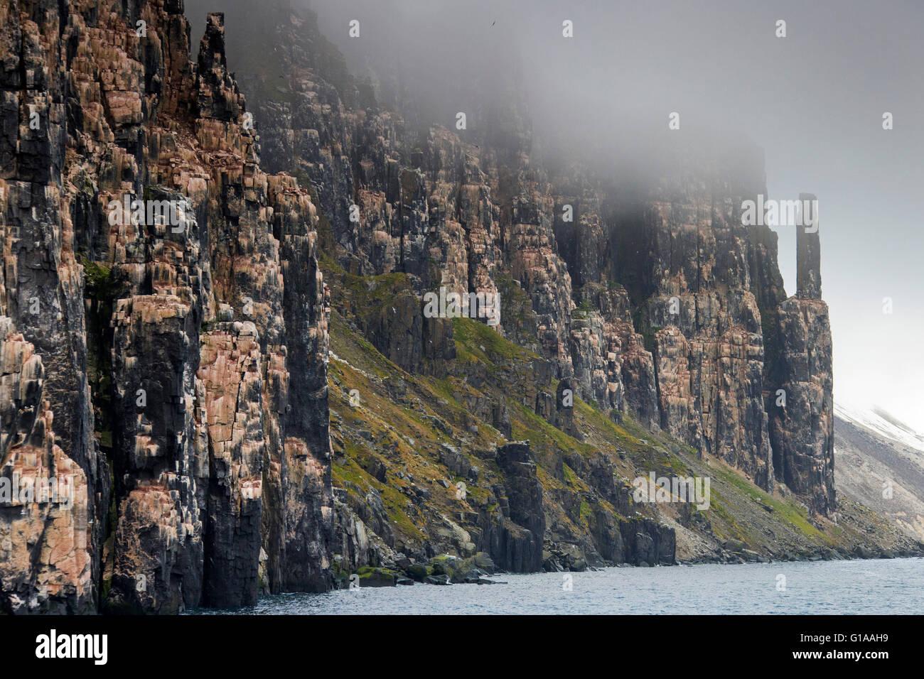 Seabird breeding colony in basalt cliff Alkefjellet, Lomfjordhalvøya in Ny-Friesland at Spitsbergen / Svalbard - Stock Image