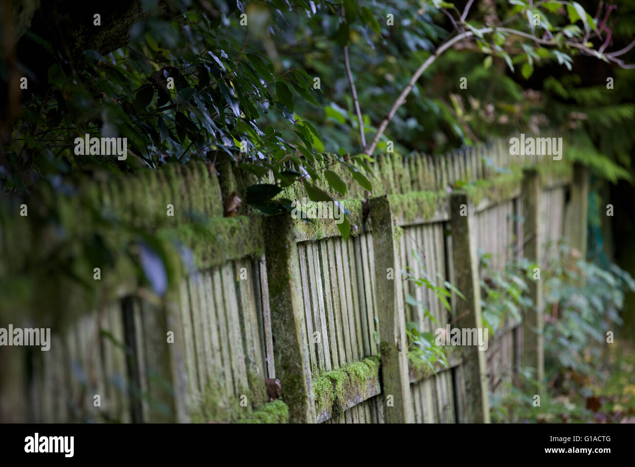 Old mossy fence - Stock Image