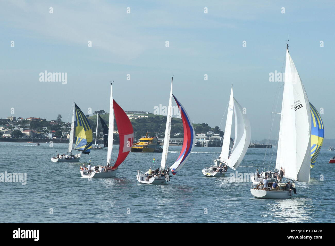 Yacht race at the Hauraki Gulf, Auckland, New Zealand on a calm day with a slight breeze - Stock Image