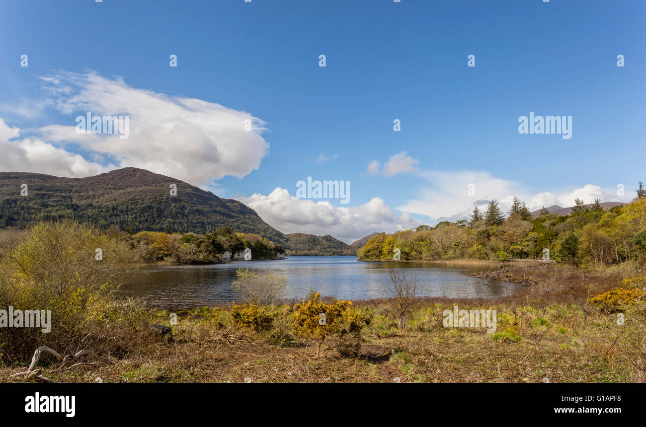 Muckross Lake, also called Middle Lake in the beautiful Killarney National Park, County Kerry, Munster Province, - Stock Image