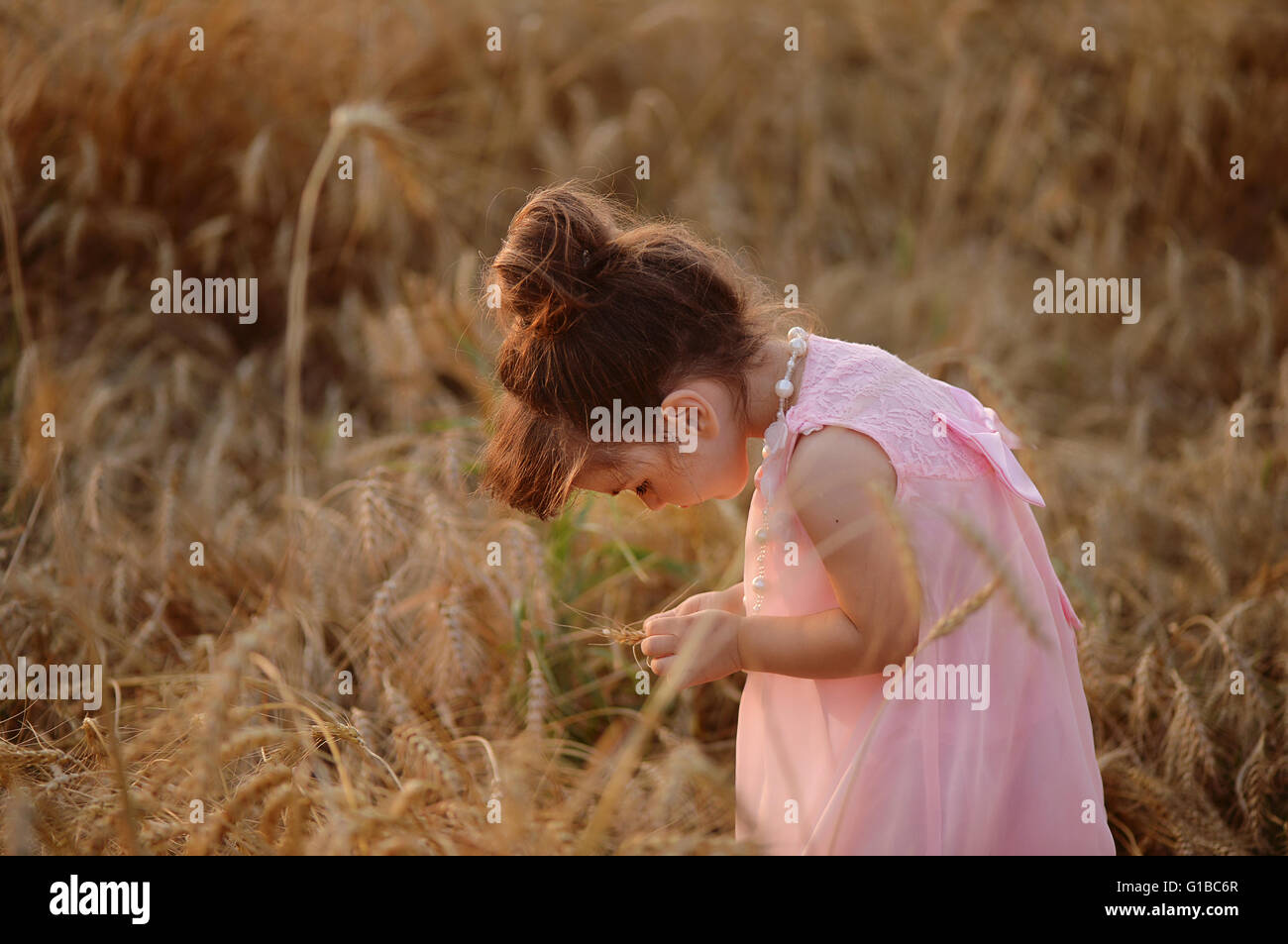 little girl in a pink dress leaned over wheat spikelets. - Stock Image