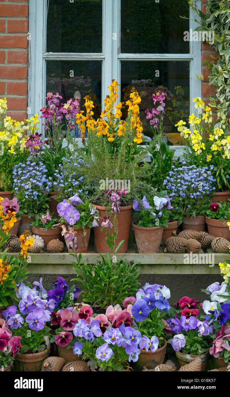 Spring Flower Display With Wall Flowers Pansies And Forget Me Nots