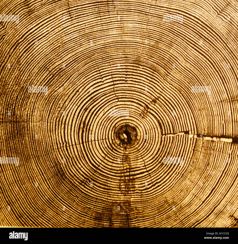 Dating using tree rings