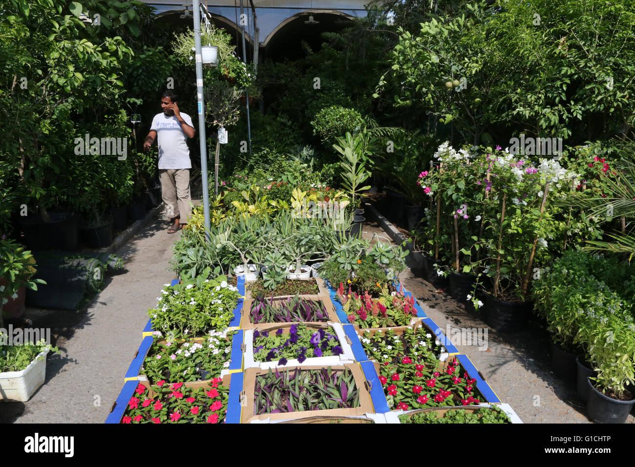 The Plant Souq At Mina Zayed Abu Dhabi United Arab Emirates Stock Photo Alamy