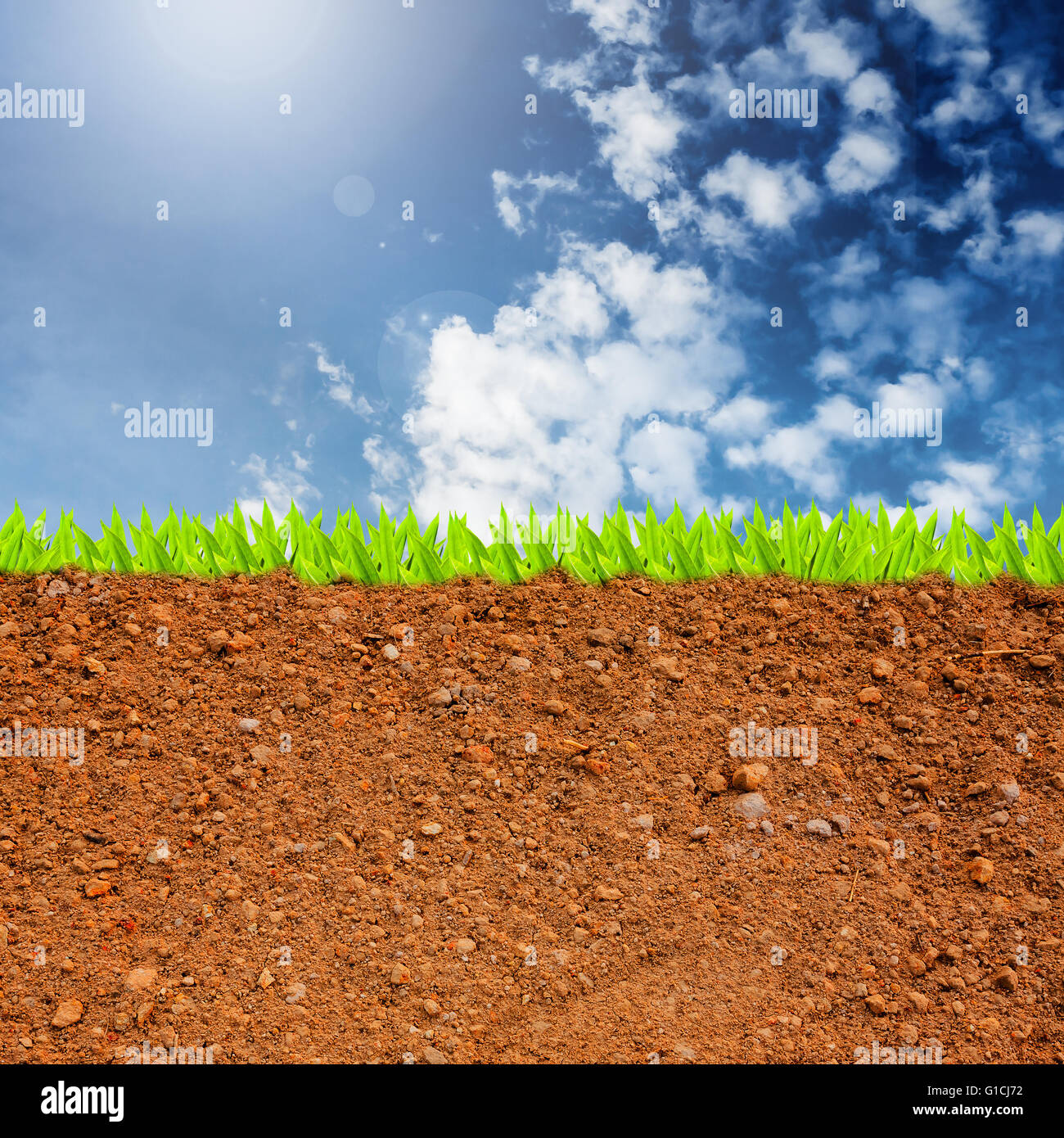 Cross Section Of Grass And Soil Against Blue Sky And