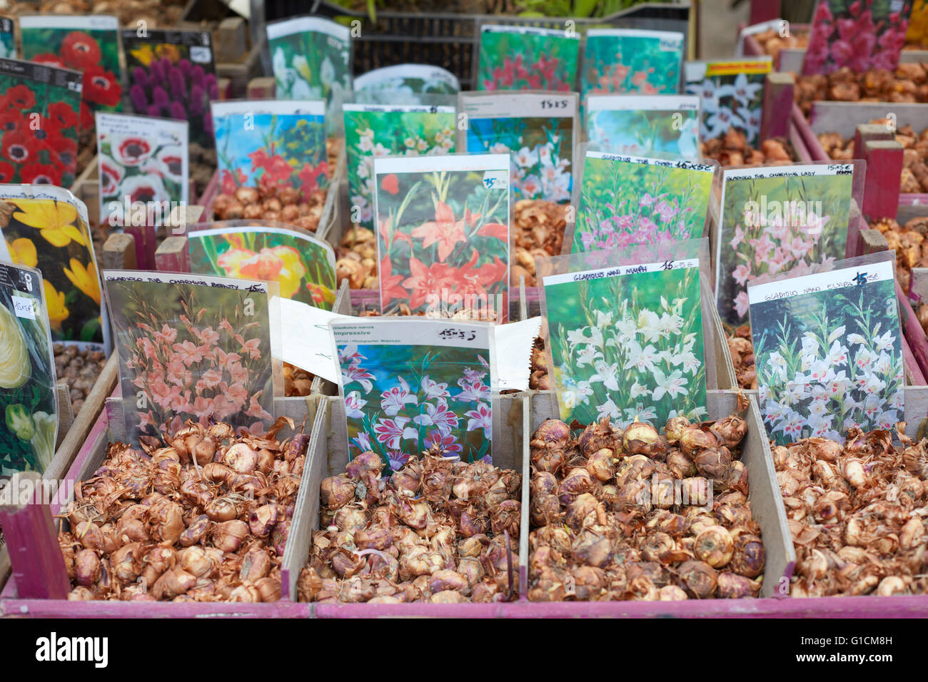 Flower bulbs on sale at Orticola fair in Milan, Italy Stock Photo