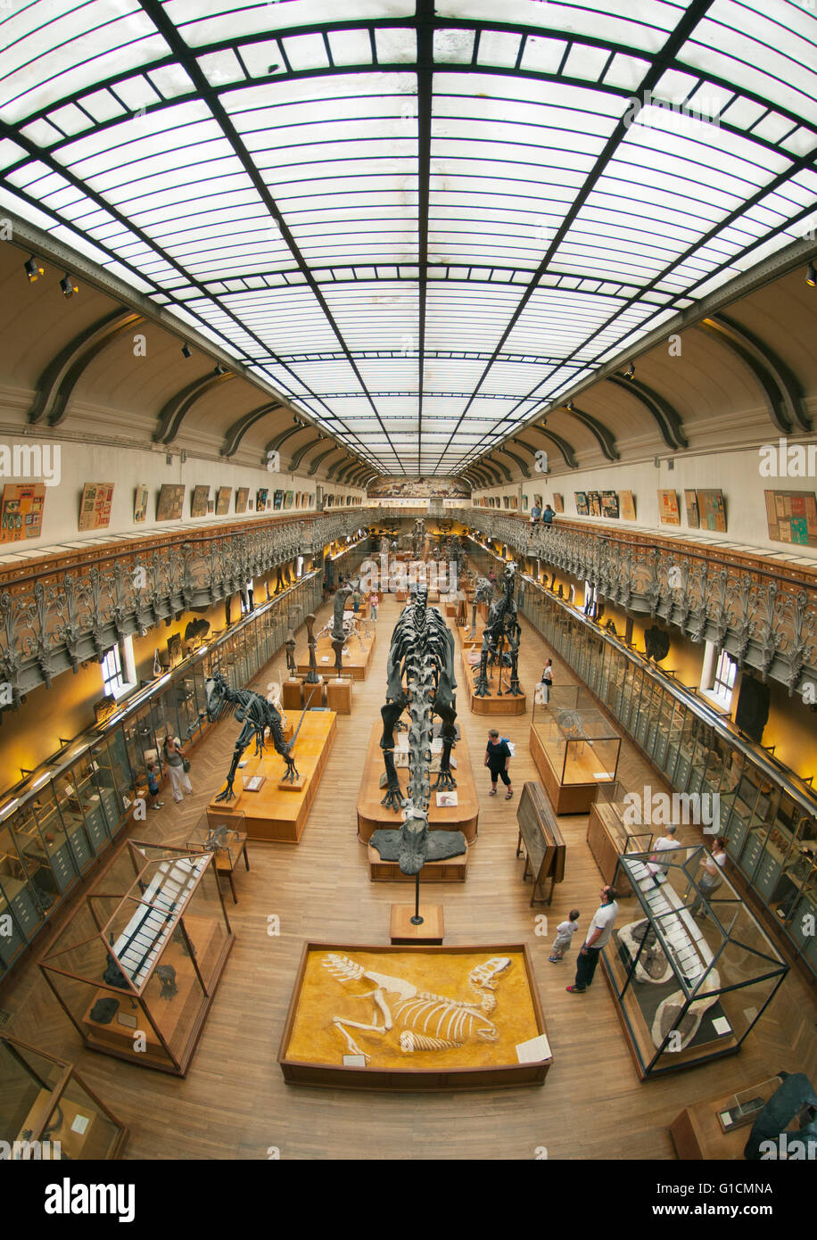 Skeletons of Dinosaurs, French National Museum of Natural History, Jardin des Plantes, Paris, France - Stock Image