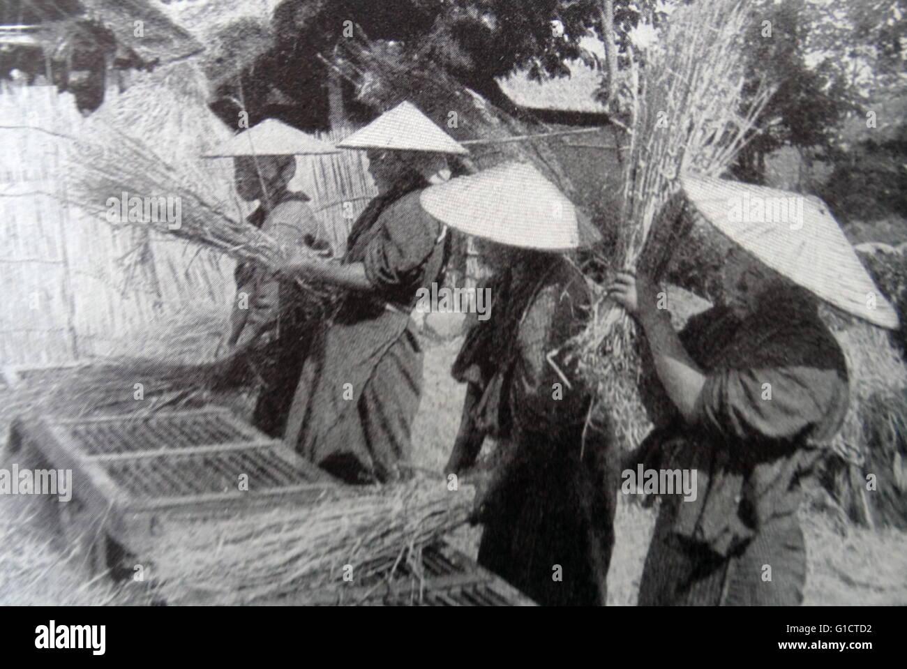 Photographic print of Japanese men threshing rice - Stock Image