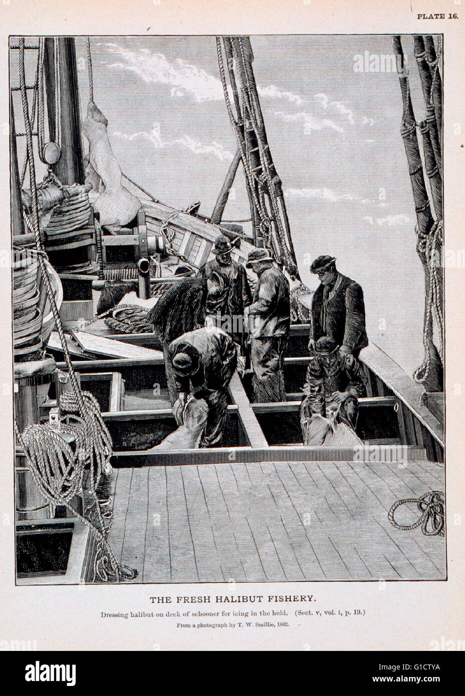 Dressing halibut on deck of schooner for icing in the hold. 1920 - Stock Image