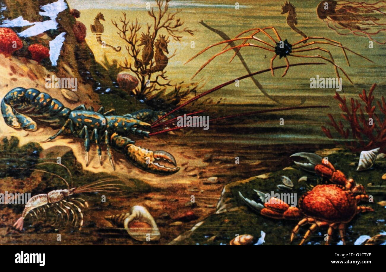 Lobsters and Sea Crabs in: 'Das Meer' by M. J. Schleiden; 1804-1881. - Stock Image