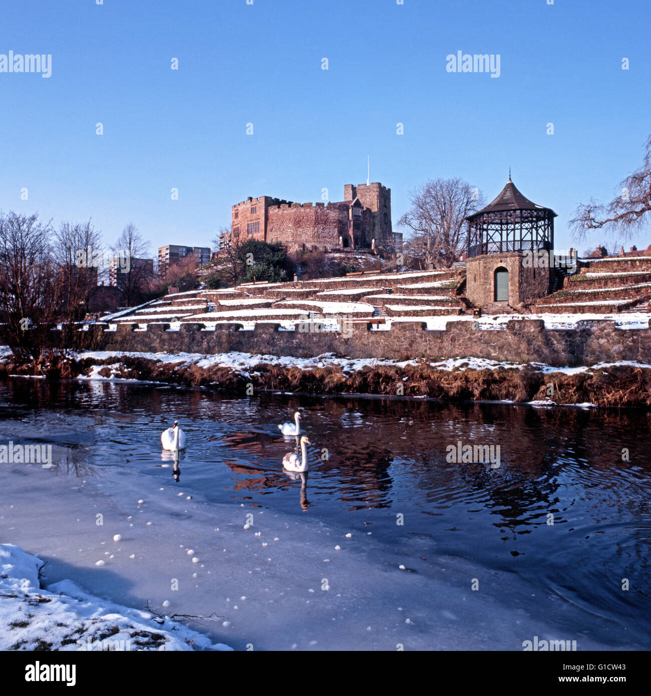 Swans on the partly frozen River Anker with the Norman Castle and Castle gardens to rear, Tamworth, Staffordshire, - Stock Image