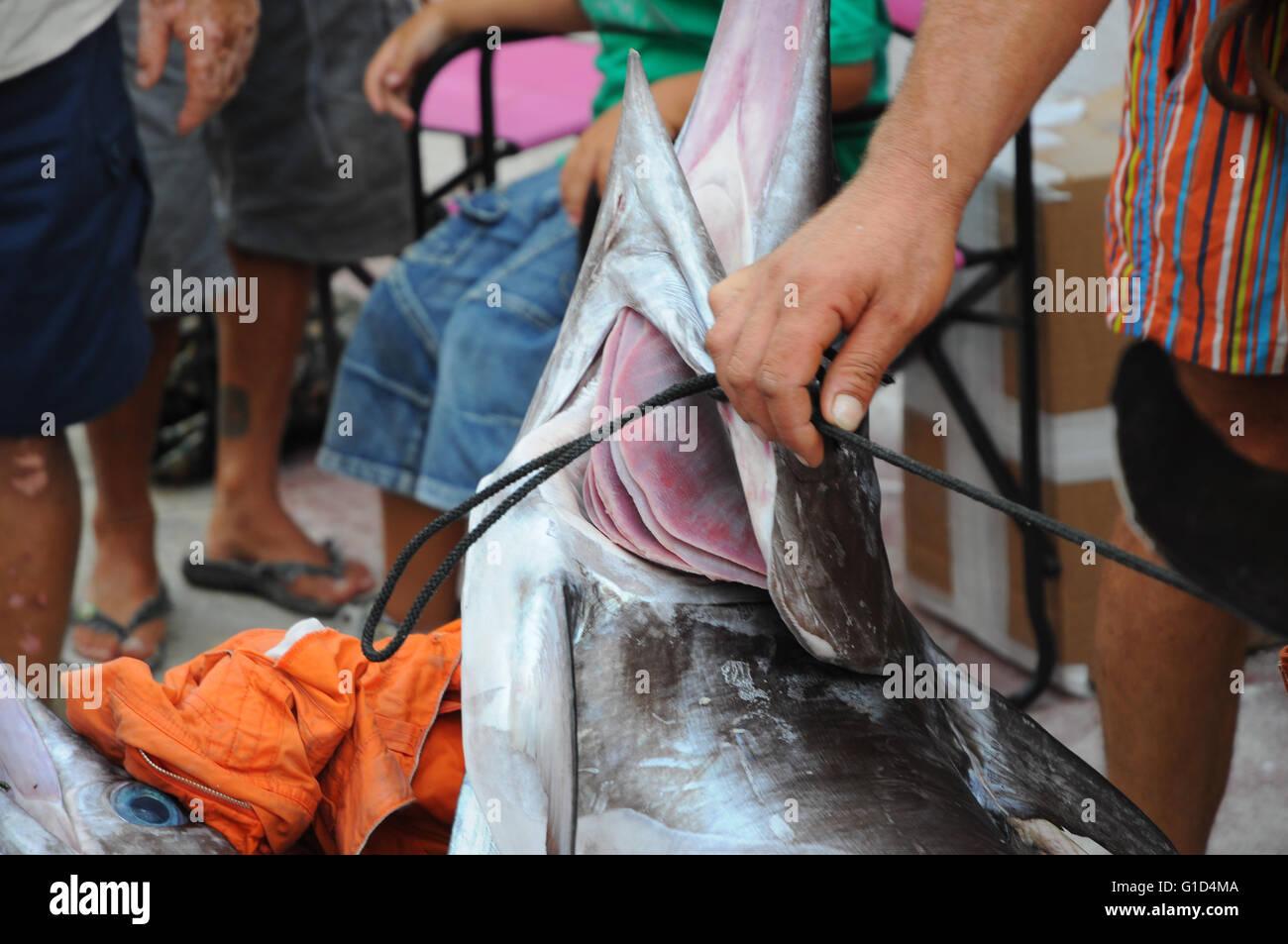 swordfish, sicily - Stock Image