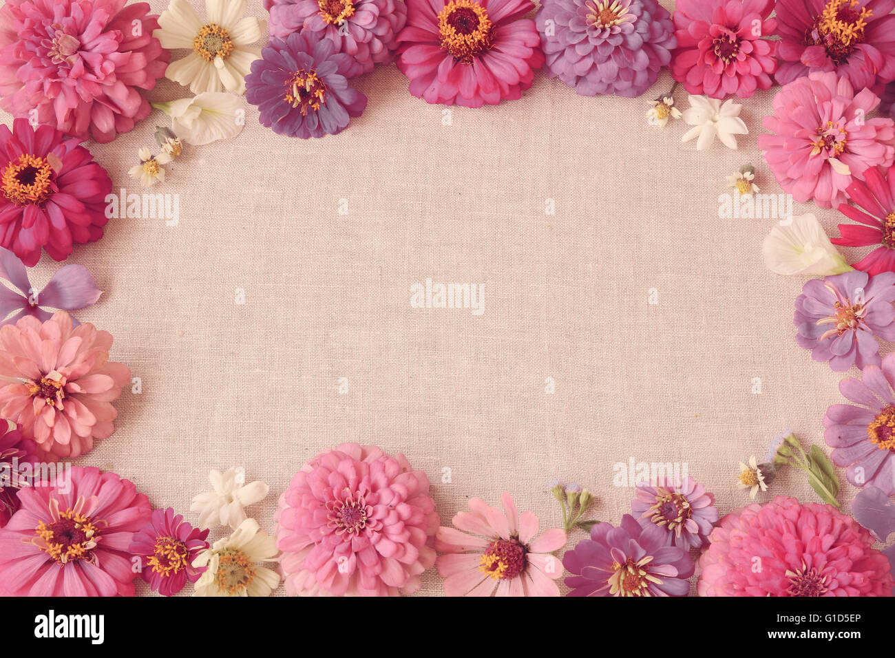 Pink flowers copy space background, selective focus, toning - Stock Image