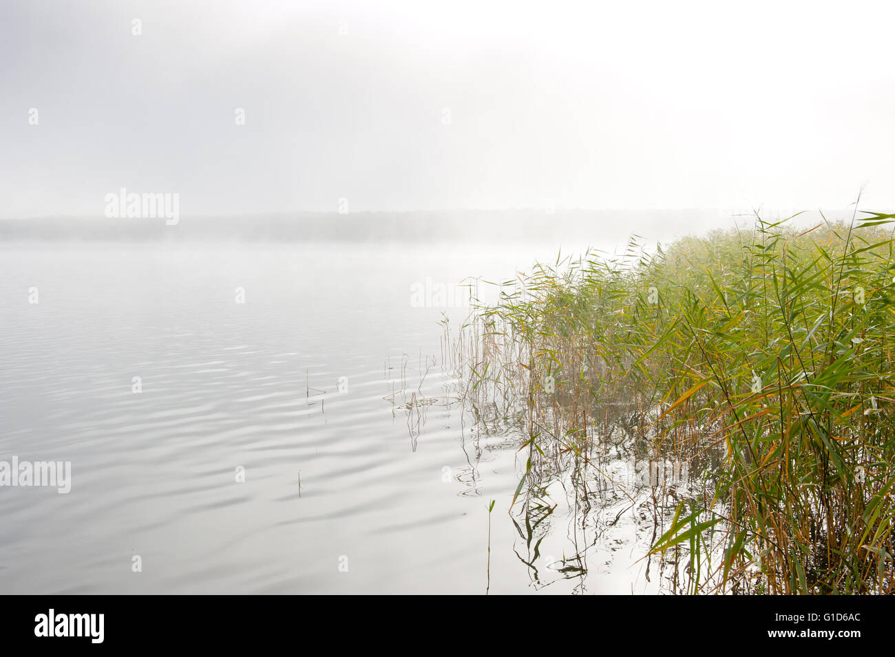 Morning haze at the lake in cold autumn weather, nature landscape in cloudy and foggy day in Poland, Europe. Reeds - Stock Image