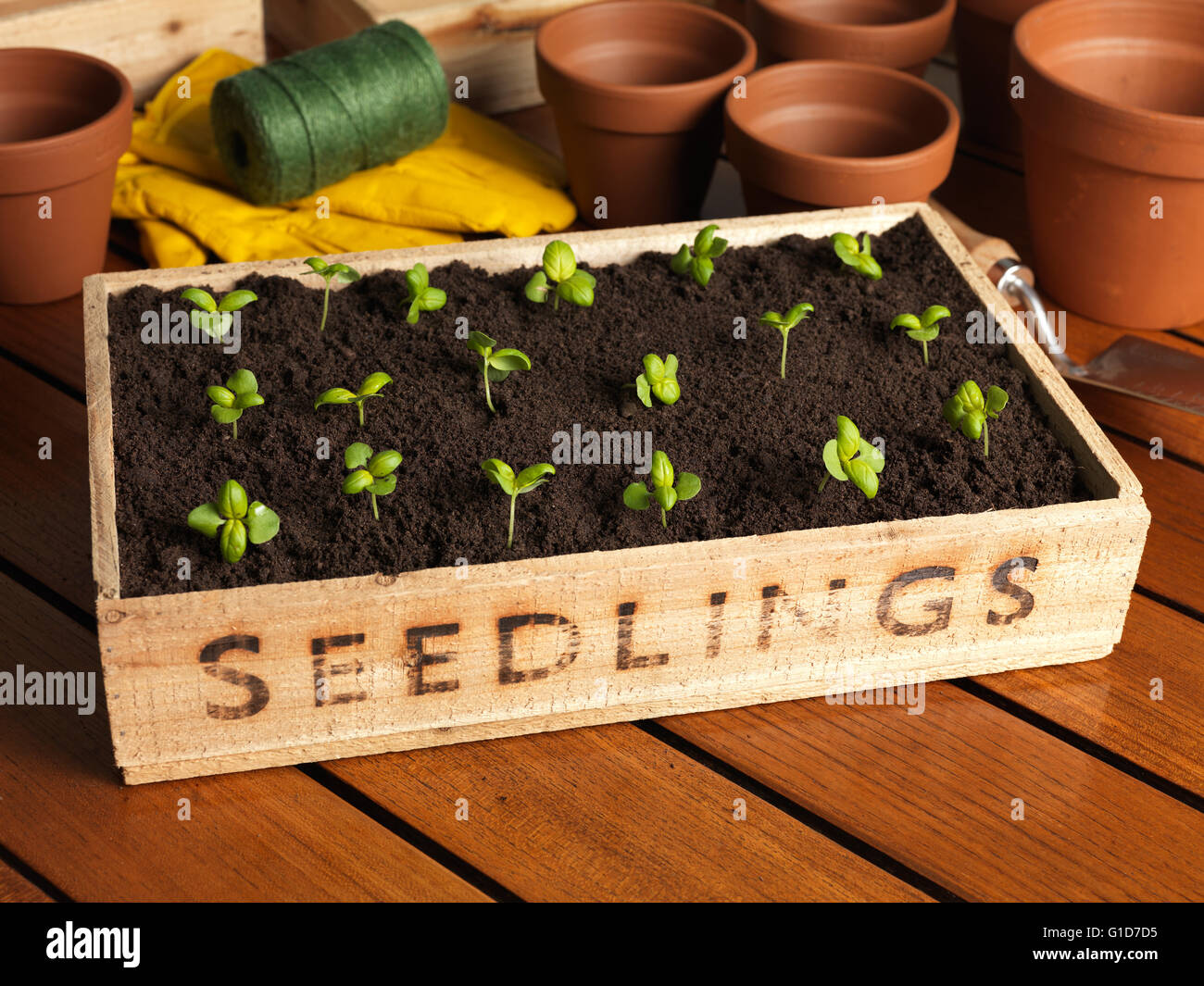 seedling tray with new growth - Stock Image