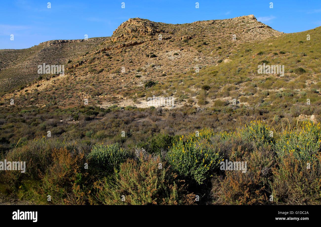 Semi desert scrub vegetation, Rodalquilar, Cabo de Gata natural park, Almeria, Spain - Stock Image