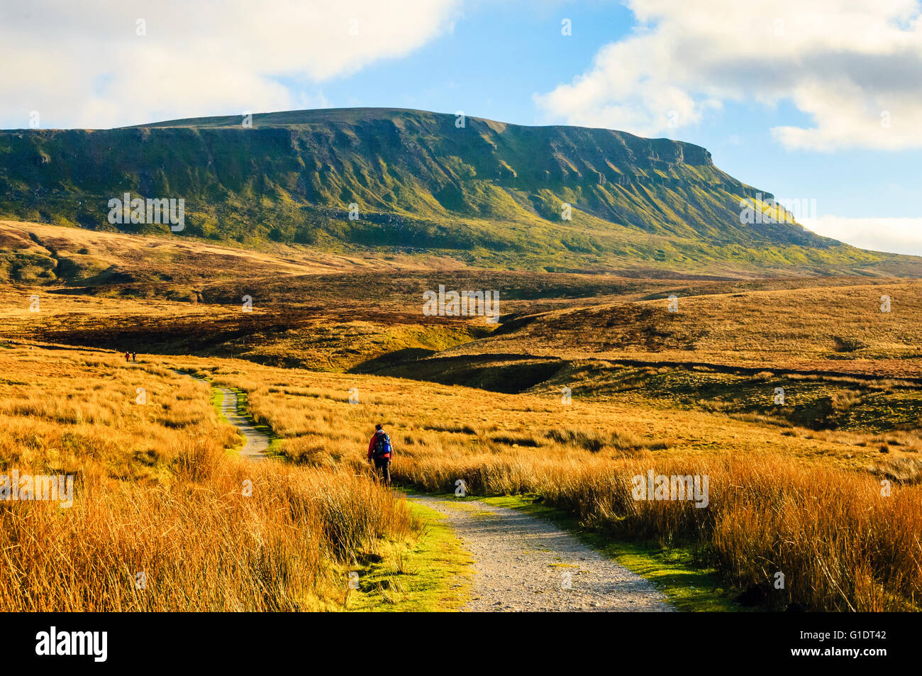 Walker on the Pennine Way below Pen-y-Ghent in the Yorkshire Dales National Park England - Stock Image