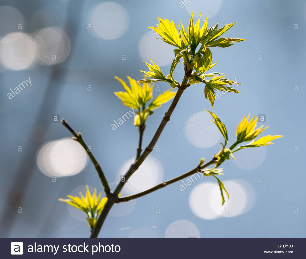 The Beginning Of Spring Season Details Of Trees And Bushes Getting