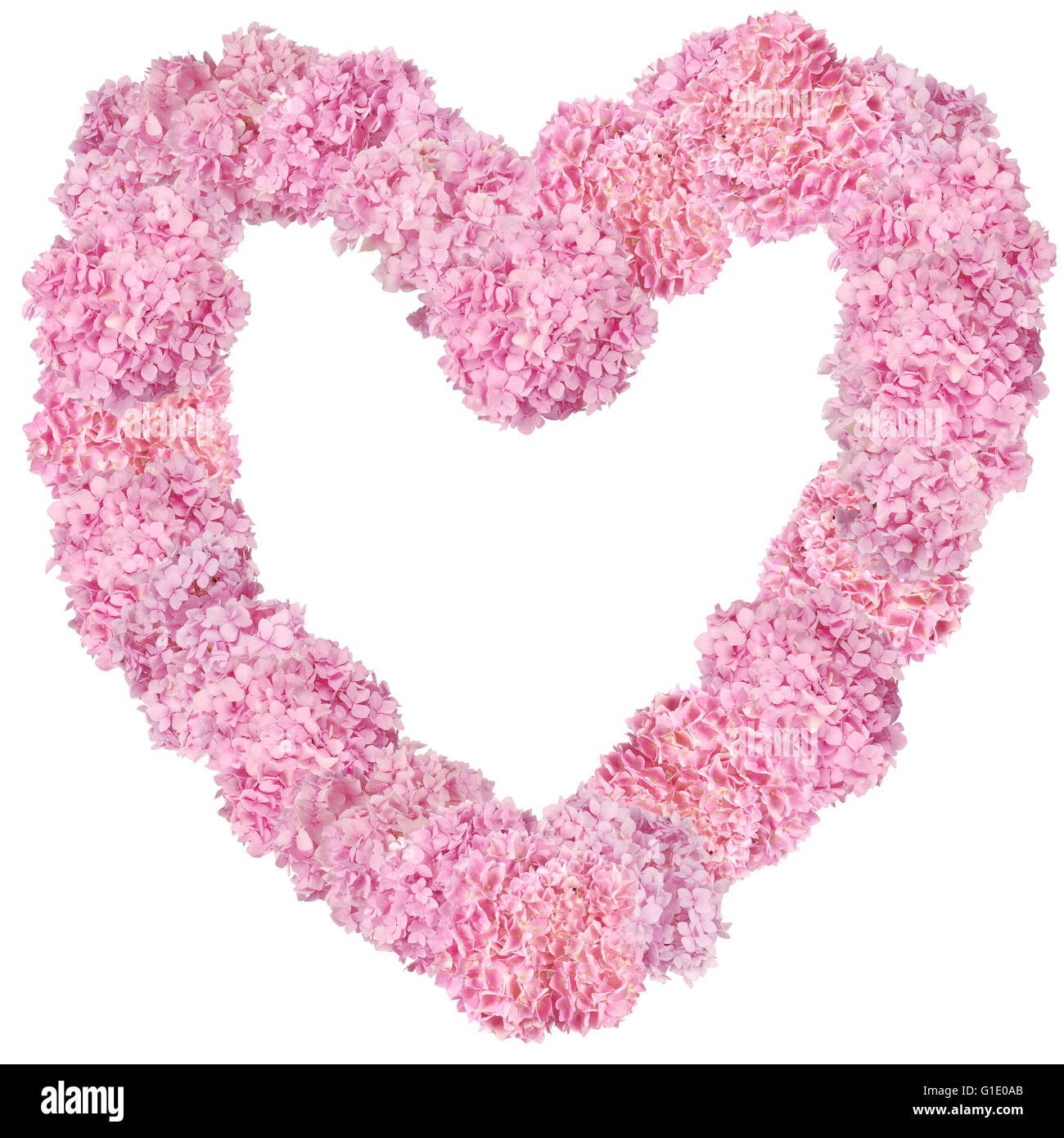 Beautiful Pink hydrangeas heart-shaped flower frame. Natural color ...
