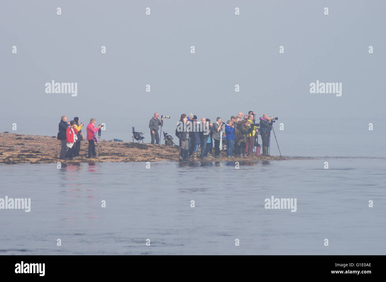 People gathering on a beach to watch dolphins - Stock Image