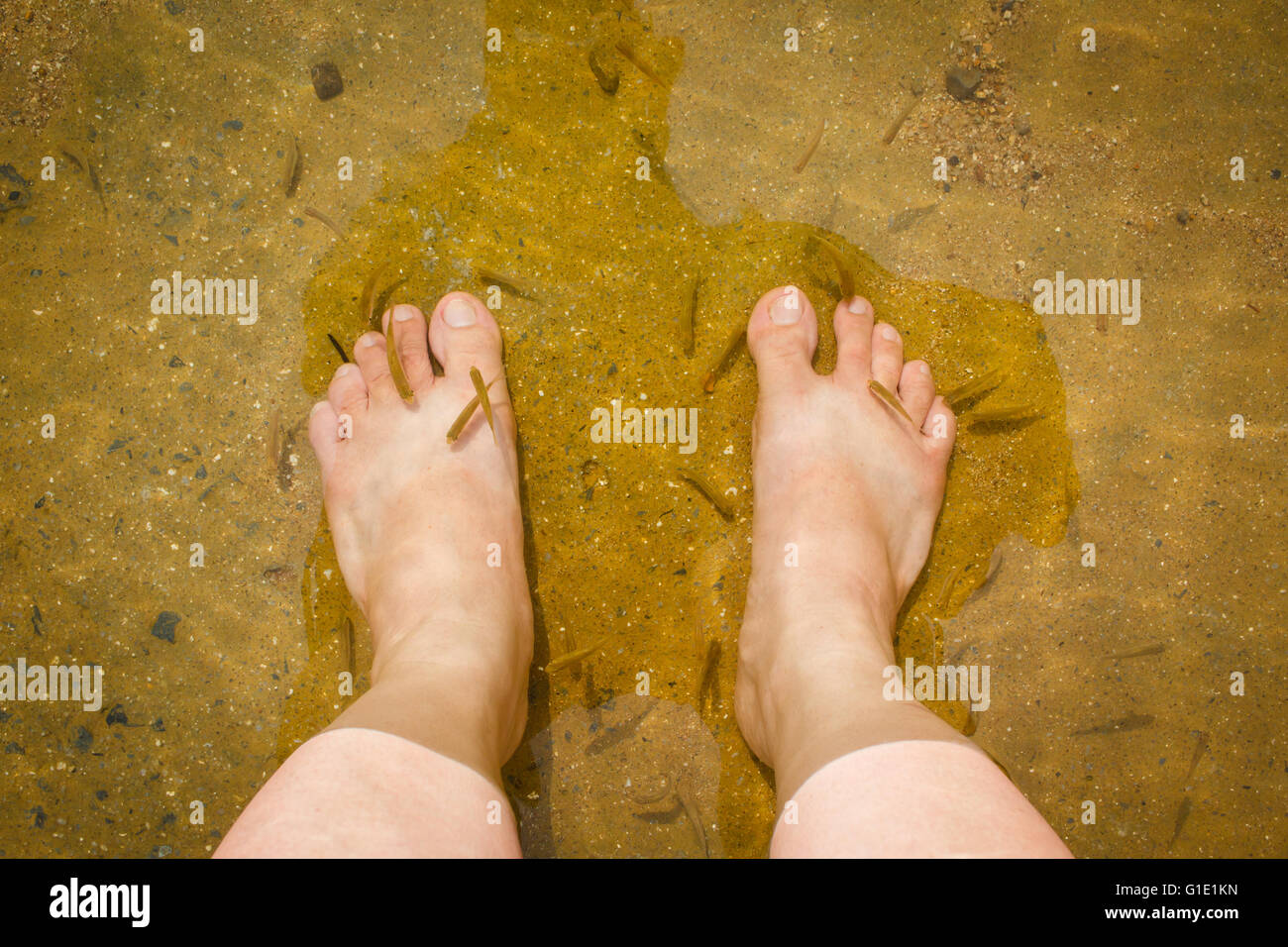 Natural fish spa therapy and foot massage. - Stock Image
