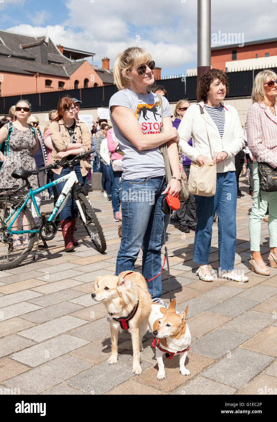Belfast, UK 14th May 2016. A protest at the Royal Courts of Justice to highlight lenient sentencing in cruelty to - Stock Image