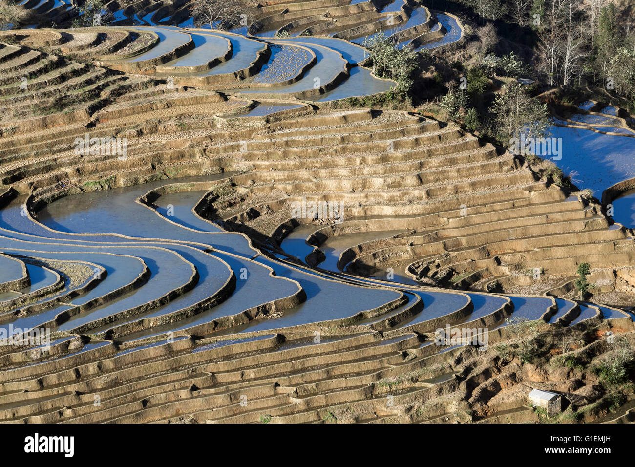 Curved rice terraces reflecting blue sky, Bada, Yuanyang County, Yunnan Province, China - Stock Image