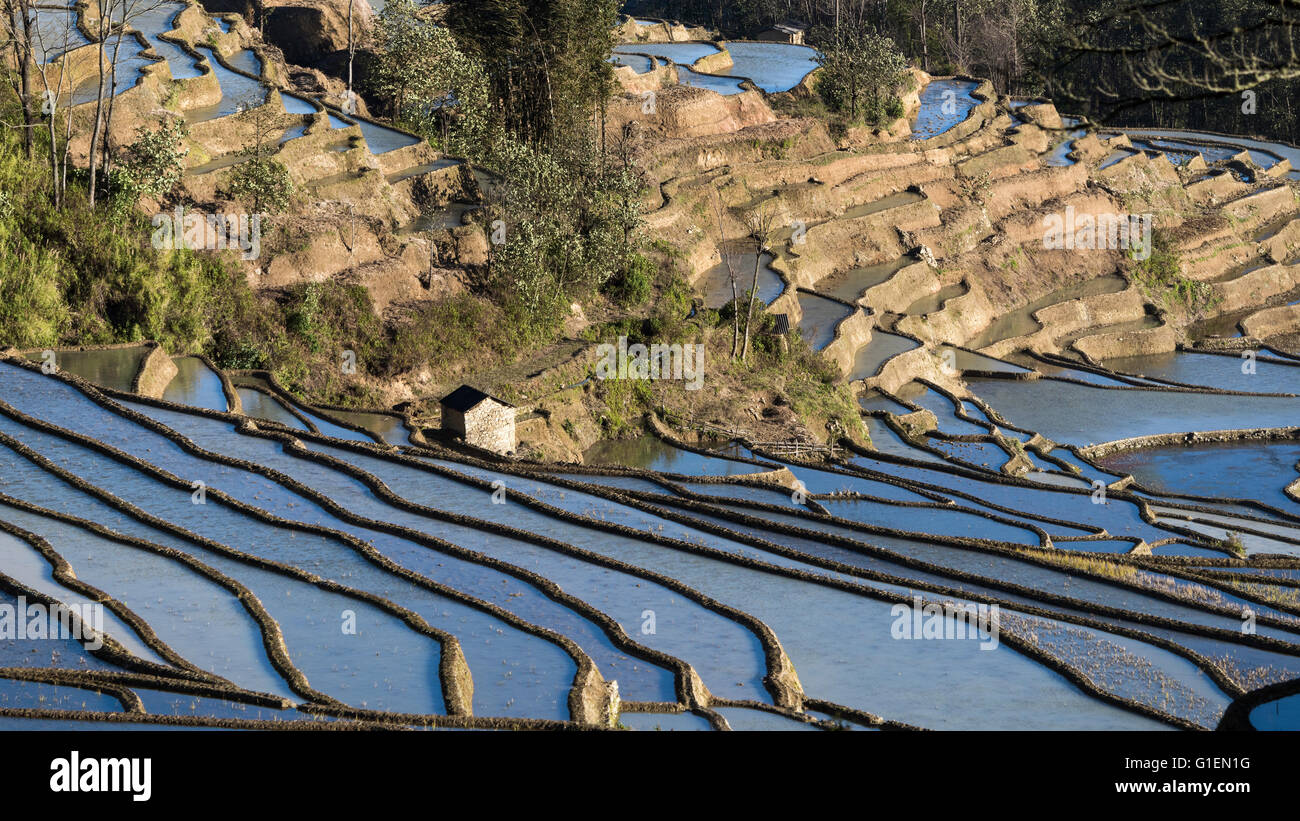 Rice terraces in the sun, Quanfuzhuang, Yuanyang County, Yunnan Province, China - Stock Image