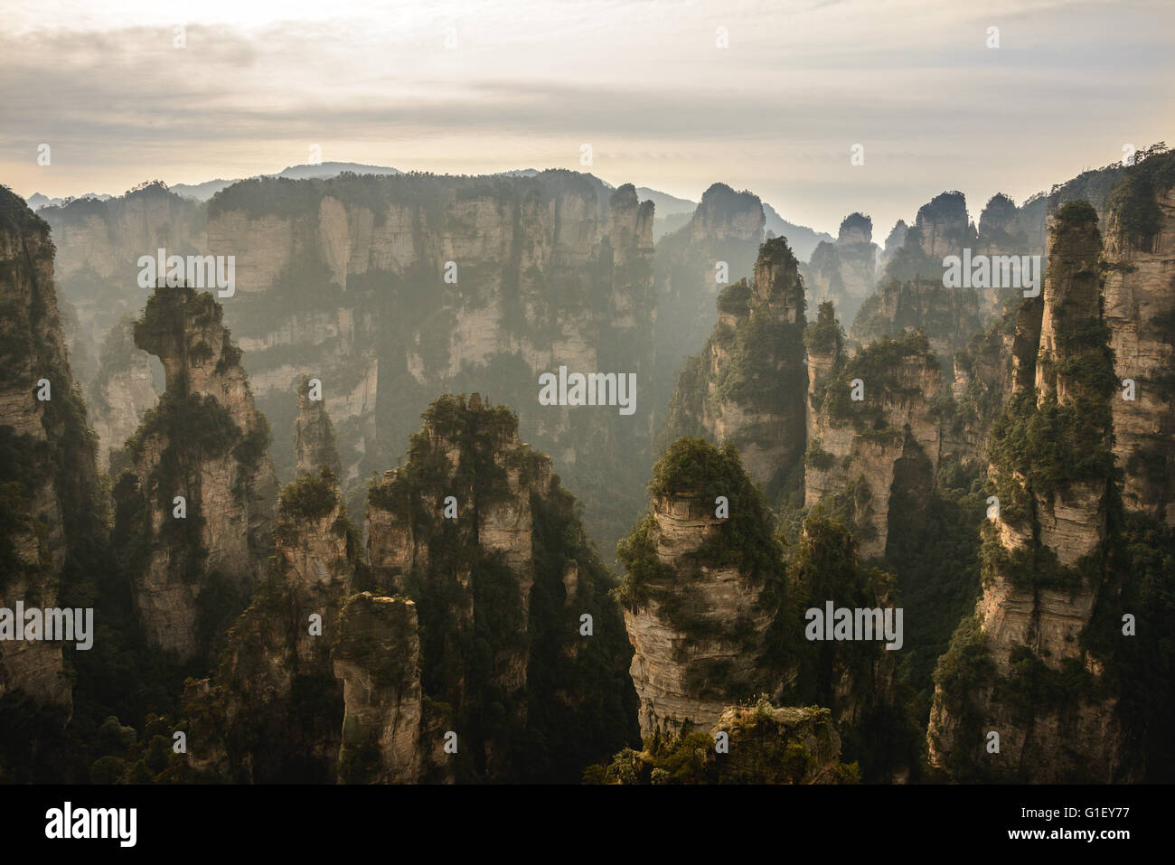 Zhangjiajie national forest park in Central China. Famed for inspiring Avatar - Stock Image