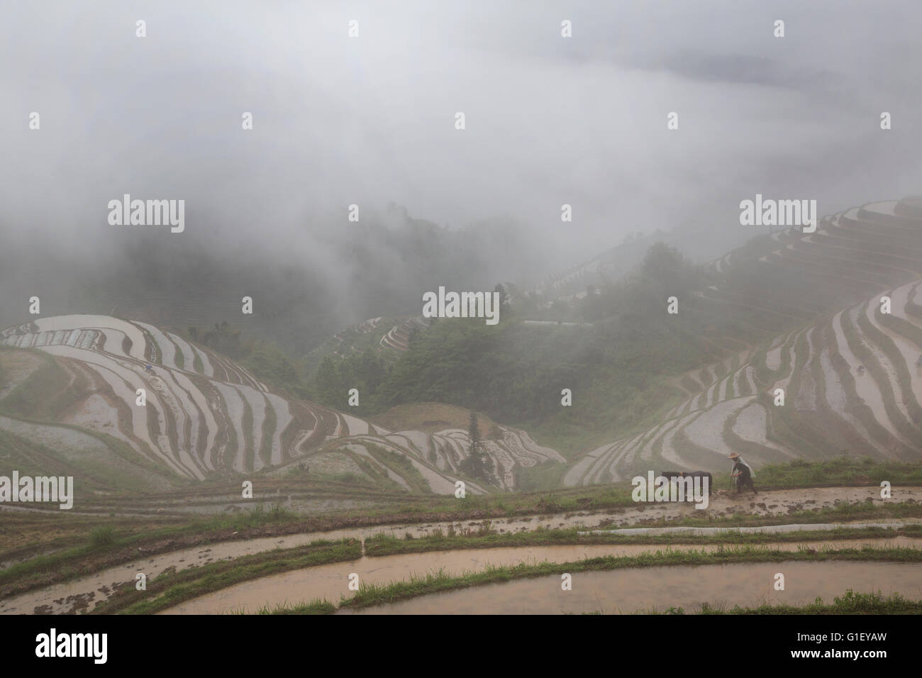 View of Longji rice terraces in Guangxi province at raining time, China - Stock Image