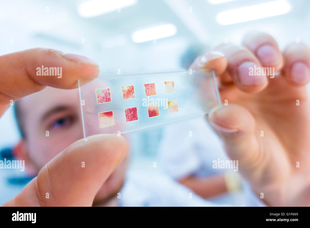 MODEL RELEASED. Lab technician holding microscope slide. - Stock Image