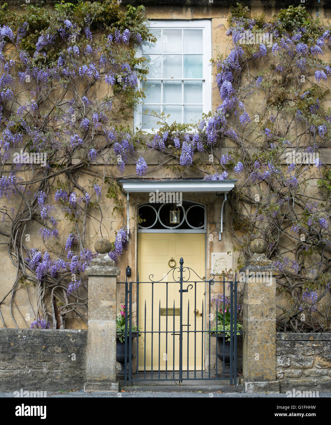 Wisteria on a cotswold stone house, Broadway, Cotswolds, Worcestershire, England - Stock Image