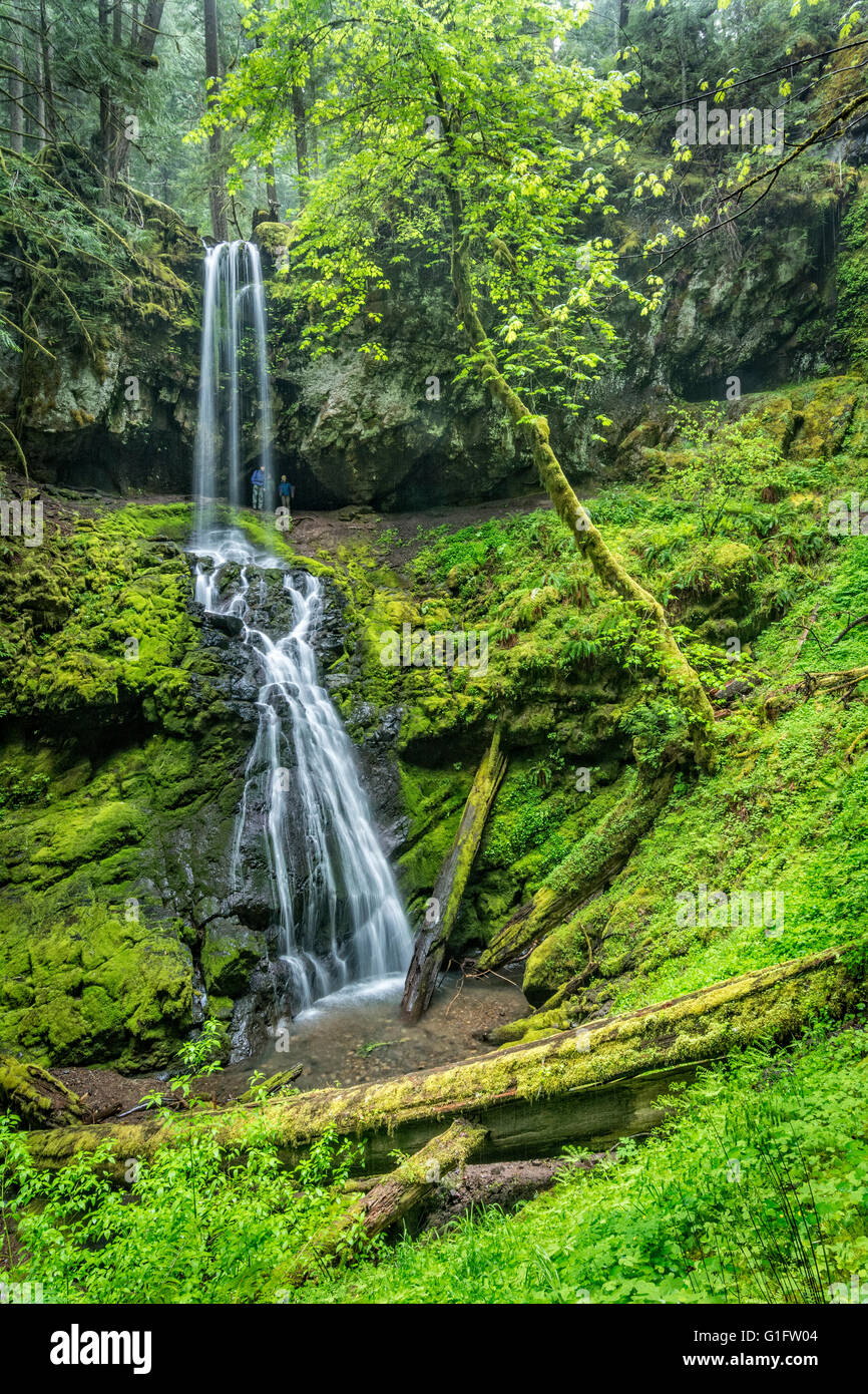 Hikers on trail behind waterfall at Upper Trestle Creek Falls, Umpqua National Forest, Oregon. Stock Photo