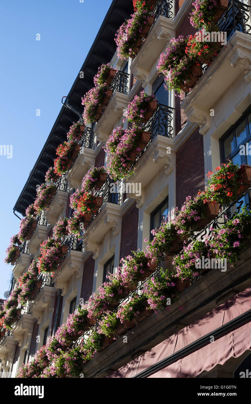León, Spain: Geraniums in bloom along Calle Ancha in the Casco Antiguo. - Stock Image