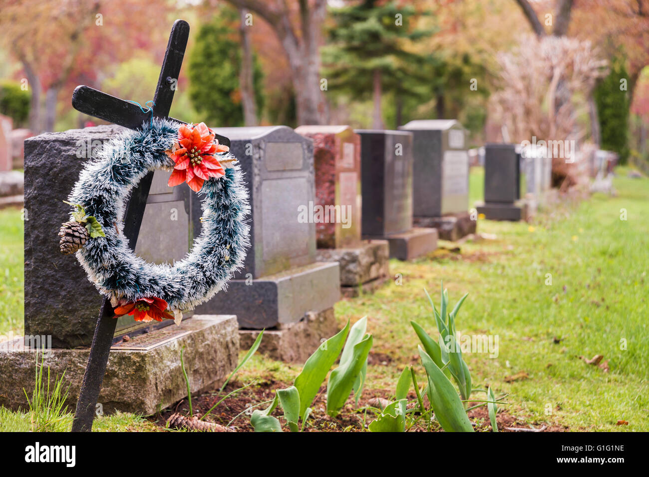 Funeral wreath with red flowers on a cross, in a cemetary, with many headstones in the background. - Stock Image