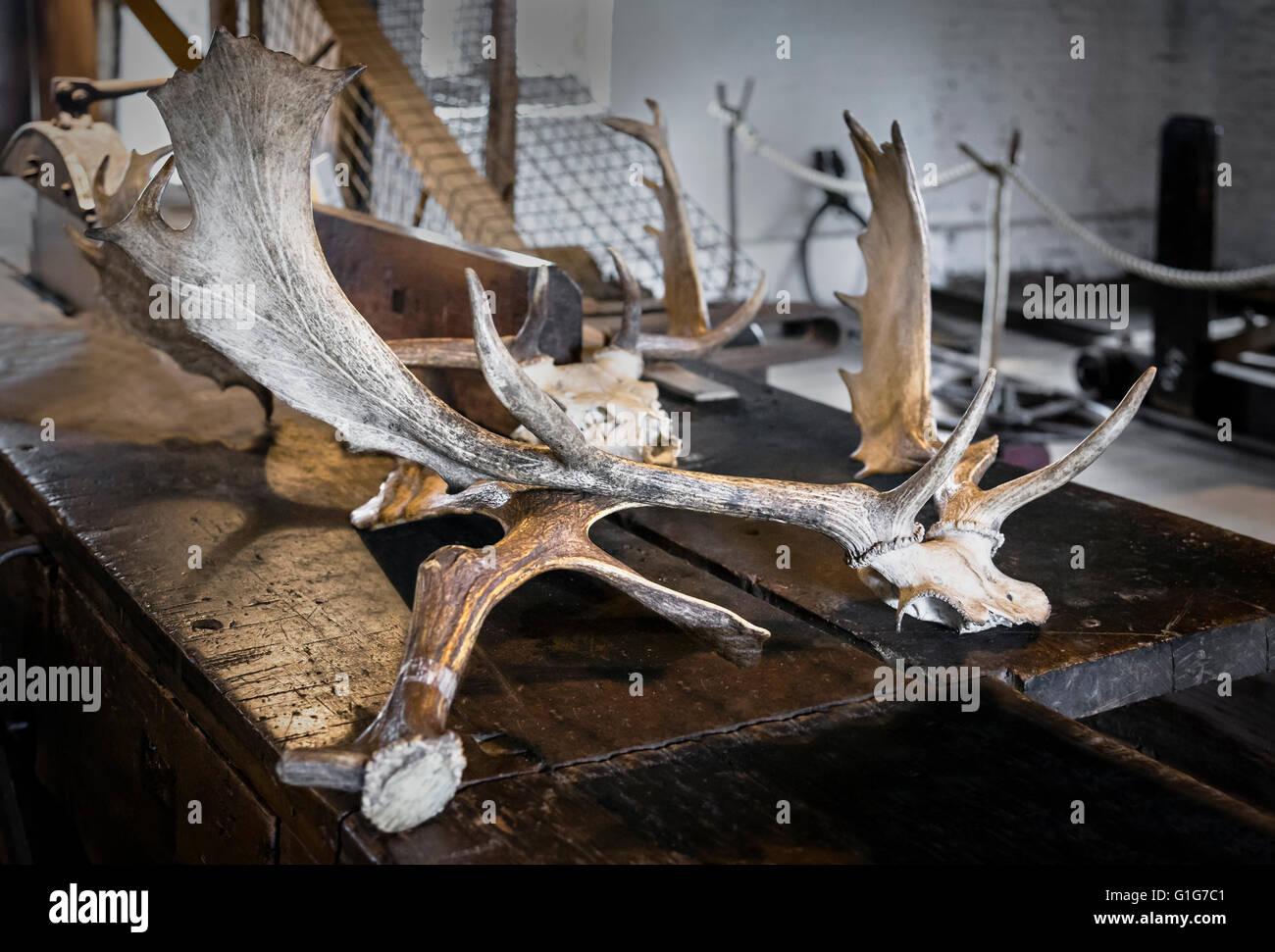 Deer horns in the mill in Dunham Massey. - Stock Image