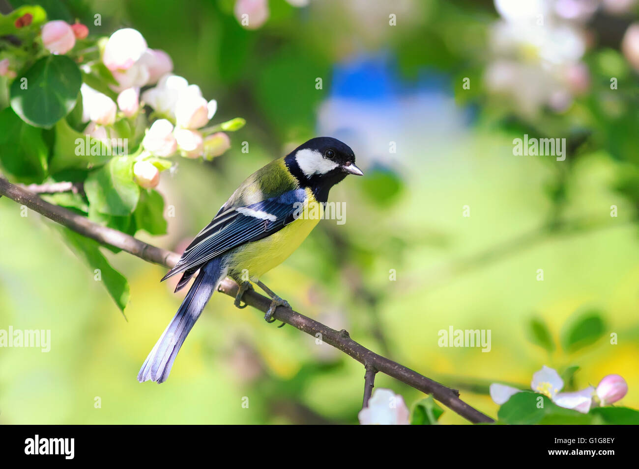 animal, background, beak, beautiful, beauty, bird, blossom, blue