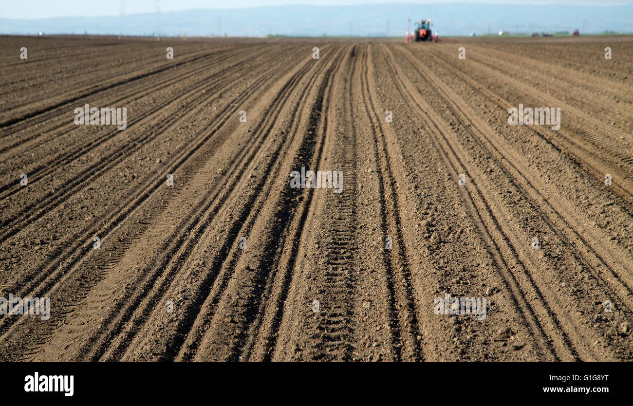 Arable land with tractor in background sowing corn maize - Stock Image