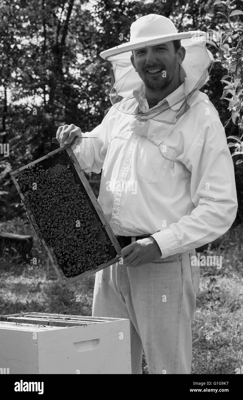 Young beekeeper smiling and showing his bee colony - Stock Image