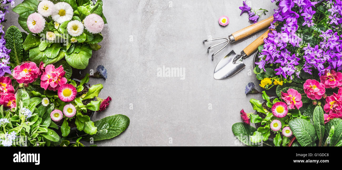 Top banner stock photos top banner stock images alamy garden tools with summer bed or balcony flowers on gray stone concrete background top view izmirmasajfo