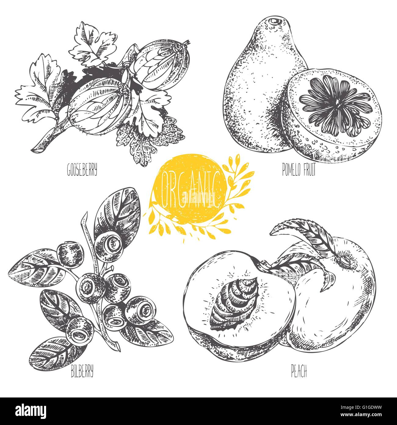 Set of vegetables, fruit and spices - Stock Vector
