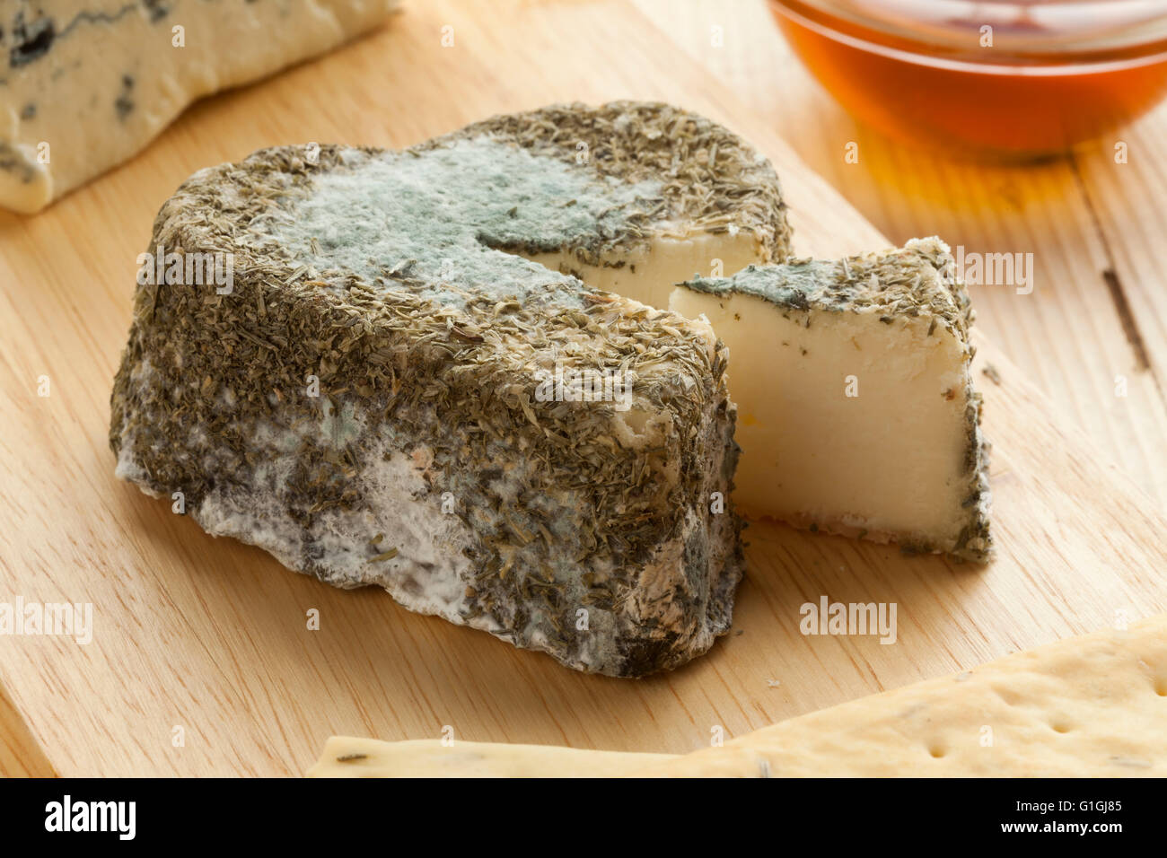 Traditional French goats cheese with edible mold - Stock Image