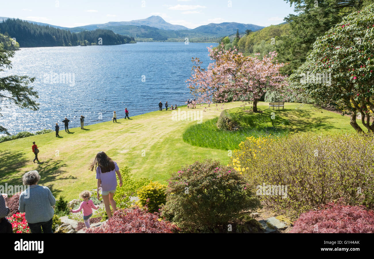 ... May 2016: UK Weather: A Beautiful Bright Spring Day And A Stunning View  Of Ben Lomond And Loch Ard Welcomed Visitors To Dun Dubh   A Garden Open  Today ...
