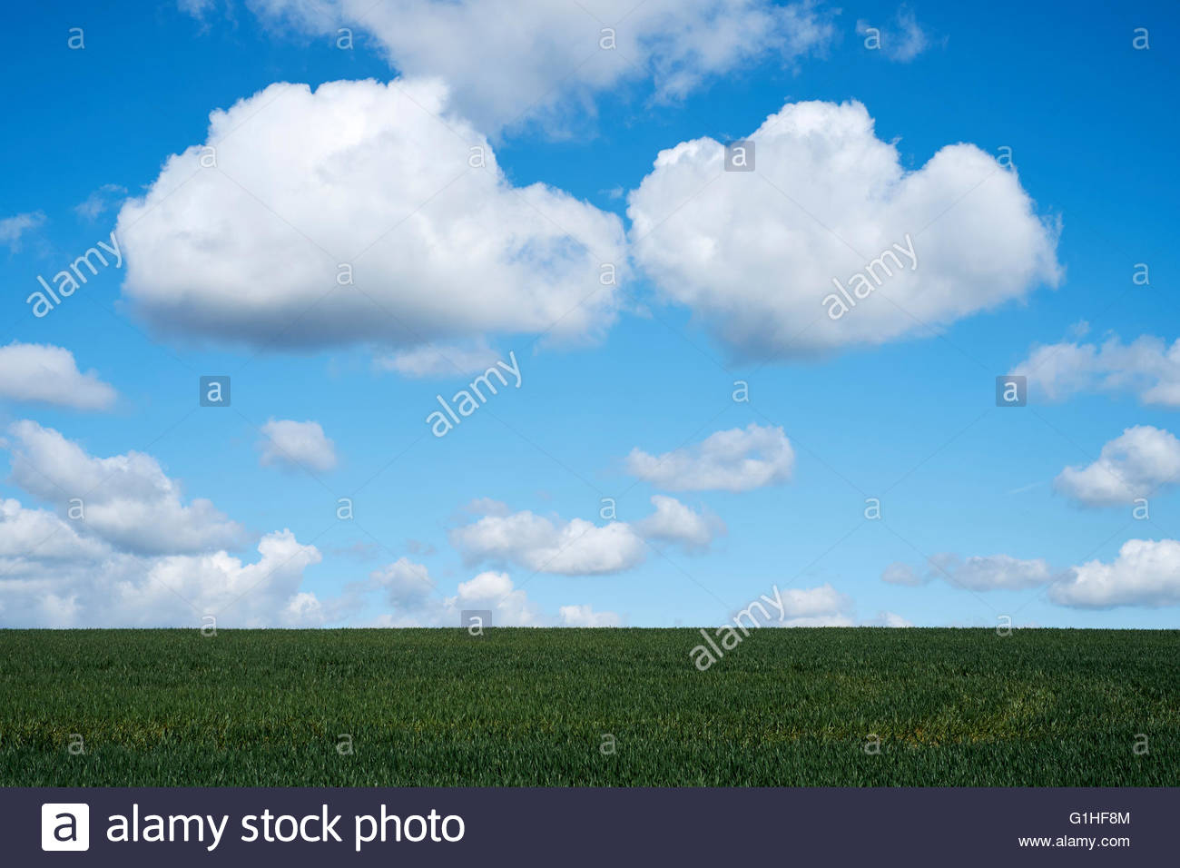 Cumulonimbus clouds forming against a bright blue sky over agricultural land. Cambridgeshire, UK. - Stock Image