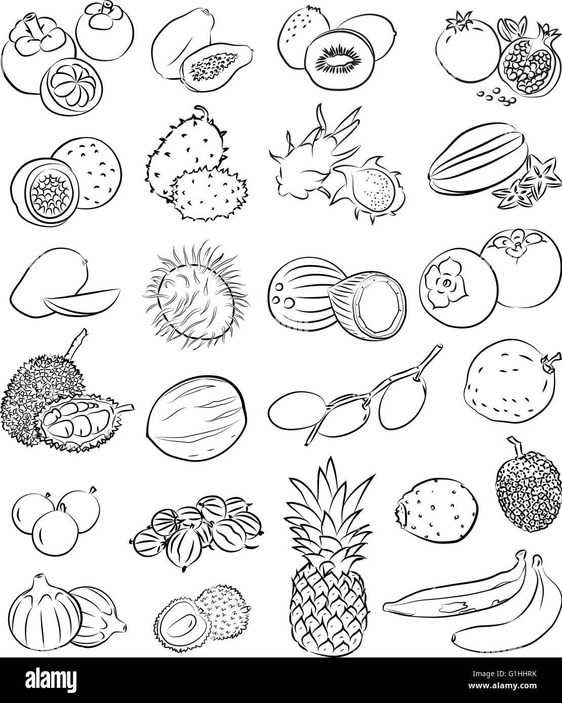 Kiwi Fruit Black and White Stock Photos & Images - Alamy